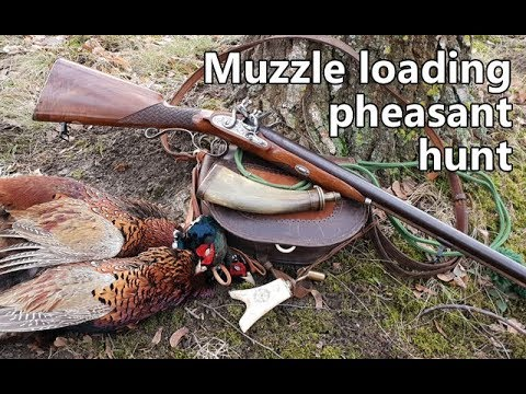 Muzzle loading pheasant hunt with flintlock