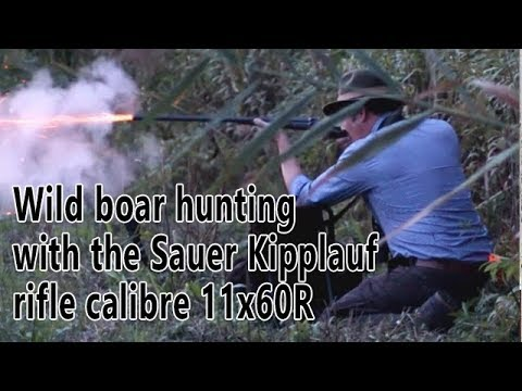 Hunting wild boar with the 19th century 11x60R Sauer & Sohn Kipplauf rifle