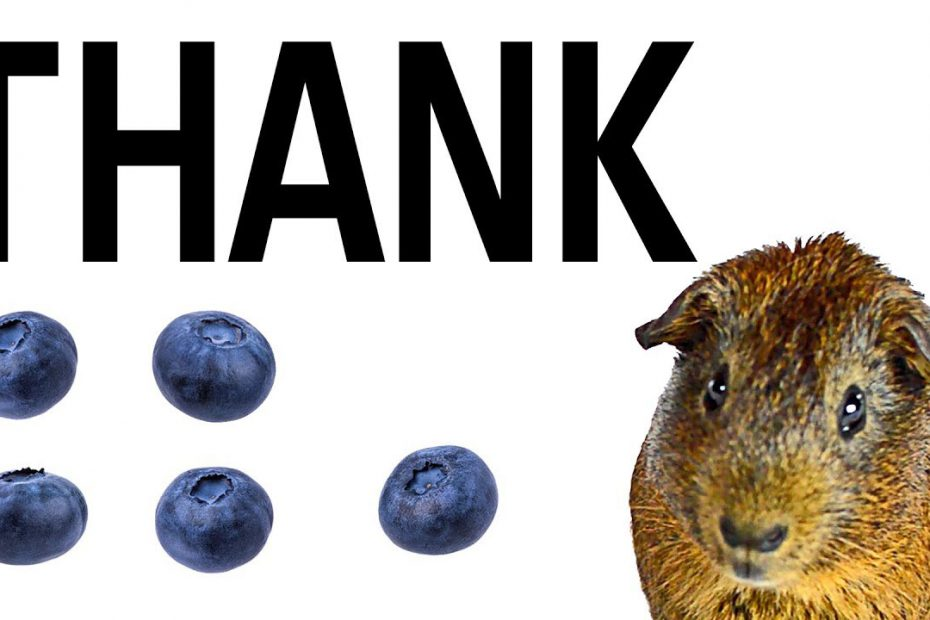 Thank: Quintuple Funded